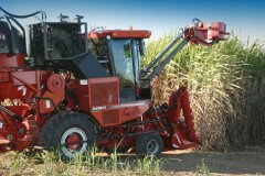 New Case IH Austoft 8000 Cane Harvester being put to work